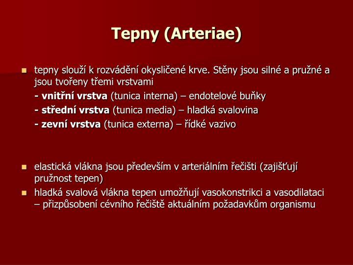 Tepny (Arteriae)