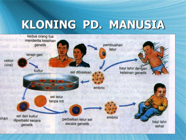 KLONING  PD.  MANUSIA