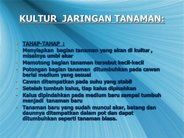 KULTUR  JARINGAN TANAMAN: