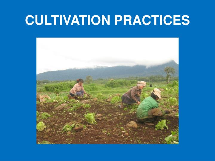 CULTIVATION PRACTICES