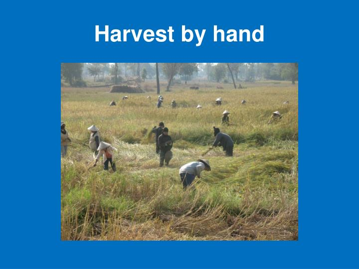 Harvest by hand