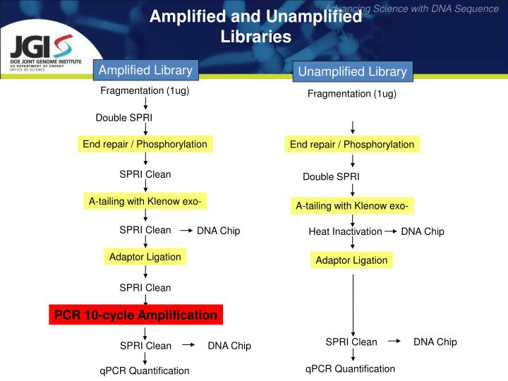Amplified and Unamplified Libraries
