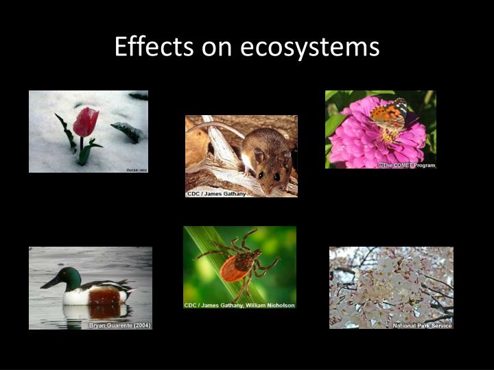 Effects on ecosystems