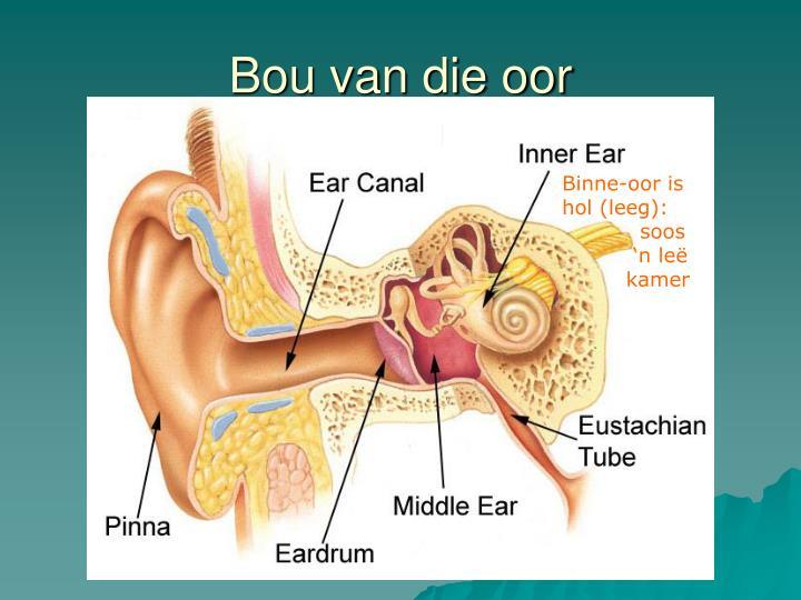 Bou van die oor