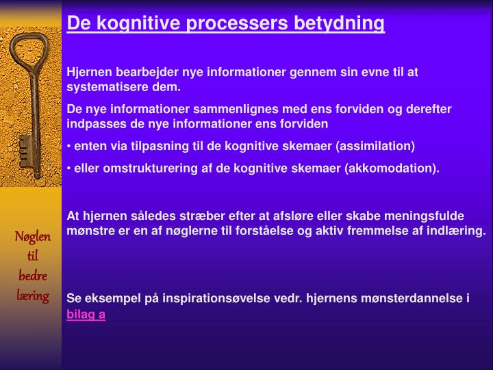 De kognitive processers betydning