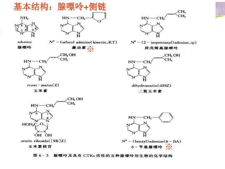基本结构:腺嘌呤