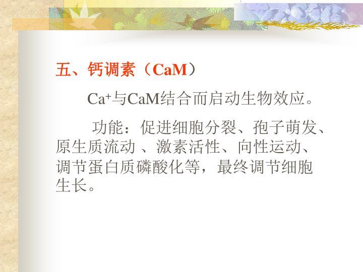 五、钙调素(