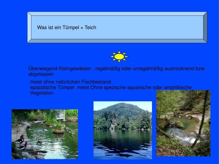 Was ist ein Tümpel + Teich
