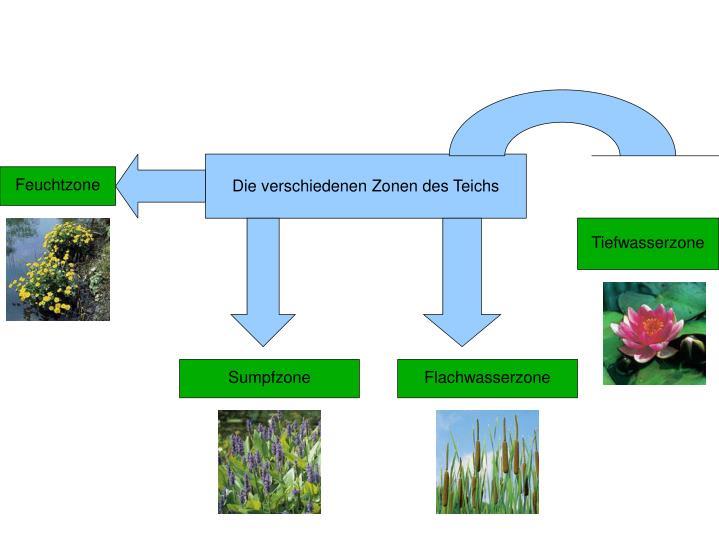 Die verschiedenen Zonen des Teichs