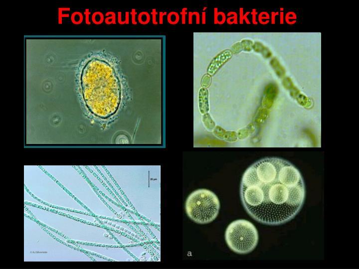 Fotoautotrofní bakterie
