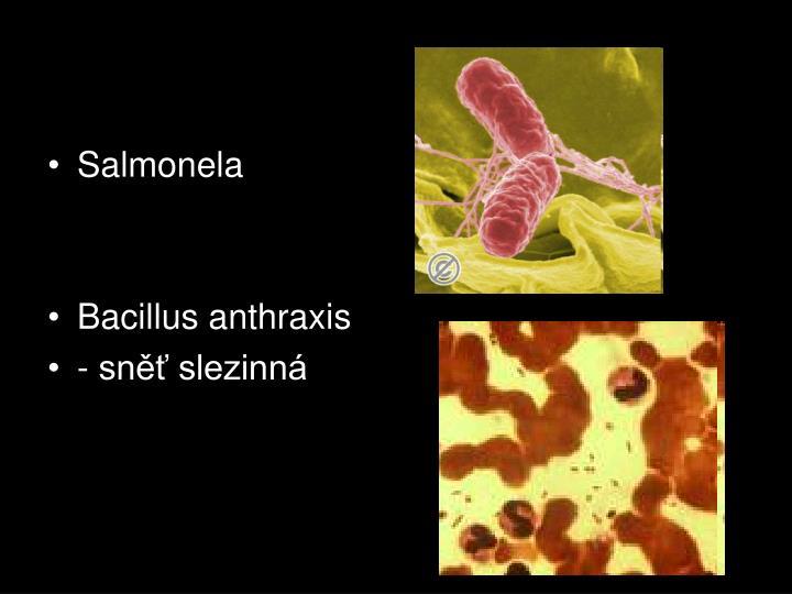 Salmonela