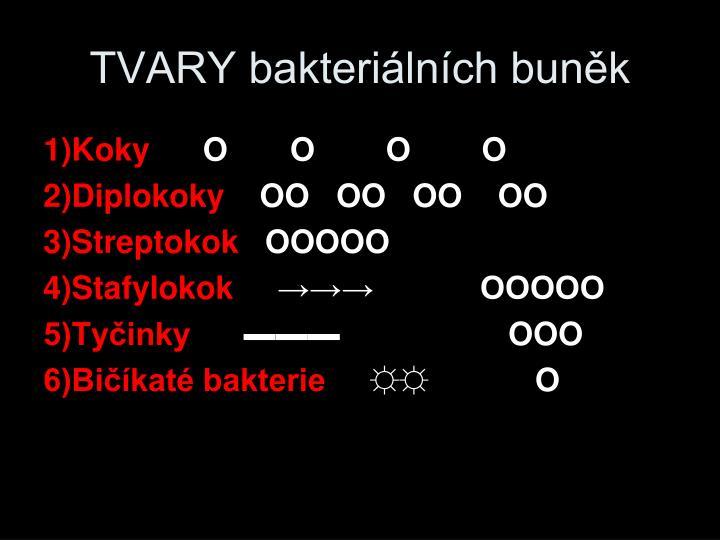 TVARY bakteriálních buněk