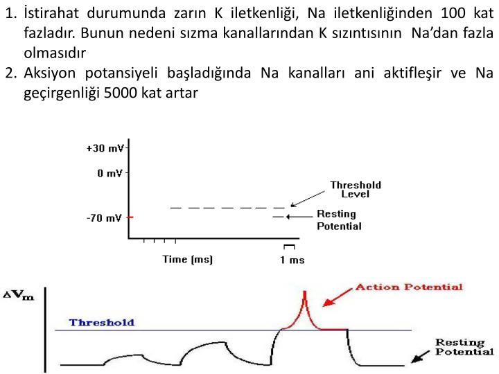 İstirahat durumunda zarın K iletkenliği, Na iletkenliğinden 100 kat fazladır. Bunun nedeni sızma kanallarından K sızıntısının  Na'dan fazla olmasıdır