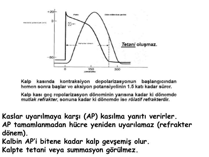 Kaslar uyarılmaya karşı (AP) kasılma yanıtı verirler.