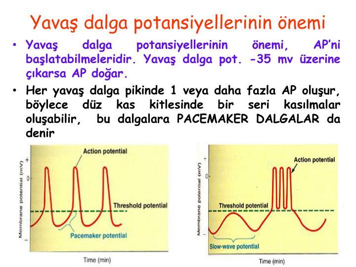Yavaş dalga potansiyellerinin önemi, AP'ni başlatabilmeleridir. Yavaş dalga pot. -35 mv üzerine çıkarsa AP doğar.