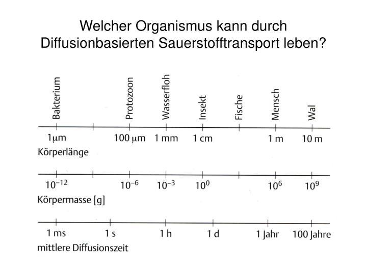 Welcher Organismus kann durch Diffusionbasierten Sauerstofftransport leben?