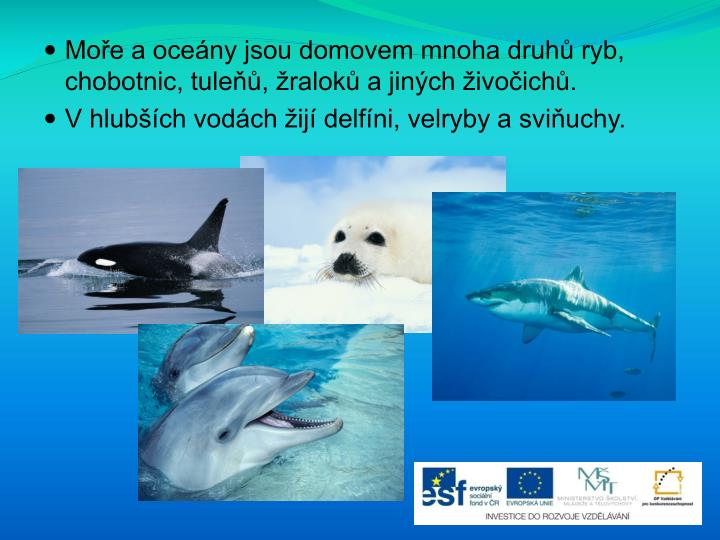 Moře a oceány jsou domovem mnoha druhů ryb, chobotnic, tuleňů, žraloků a jiných živočichů.