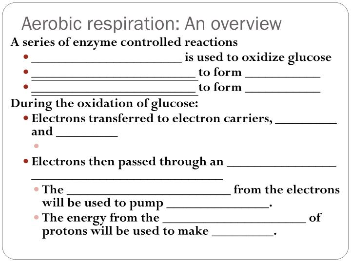 Aerobic respiration: An overview