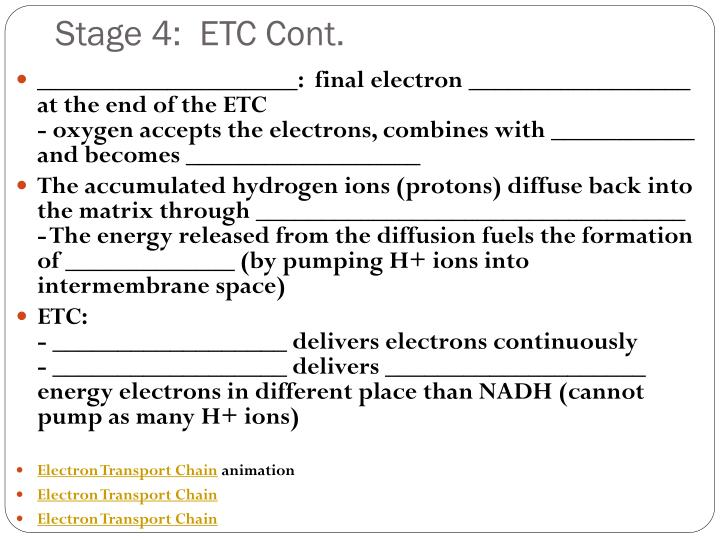 Stage 4:  ETC Cont.