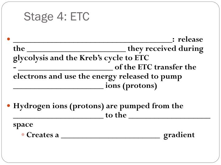 Stage 4: ETC