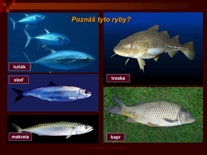 Poznáš tyto ryby?