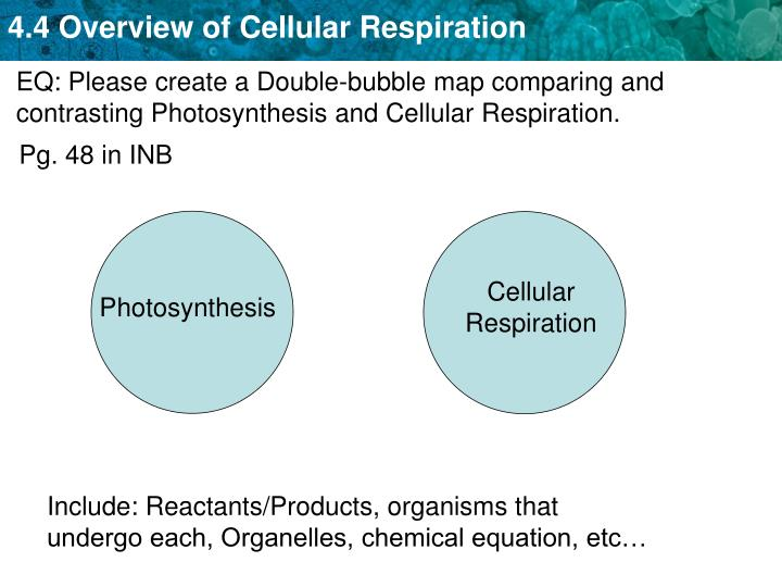EQ: Please create a Double-bubble map comparing and contrasting Photosynthesis and Cellular Respiration.