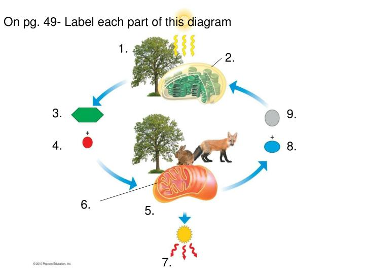 On pg. 49- Label each part of this diagram