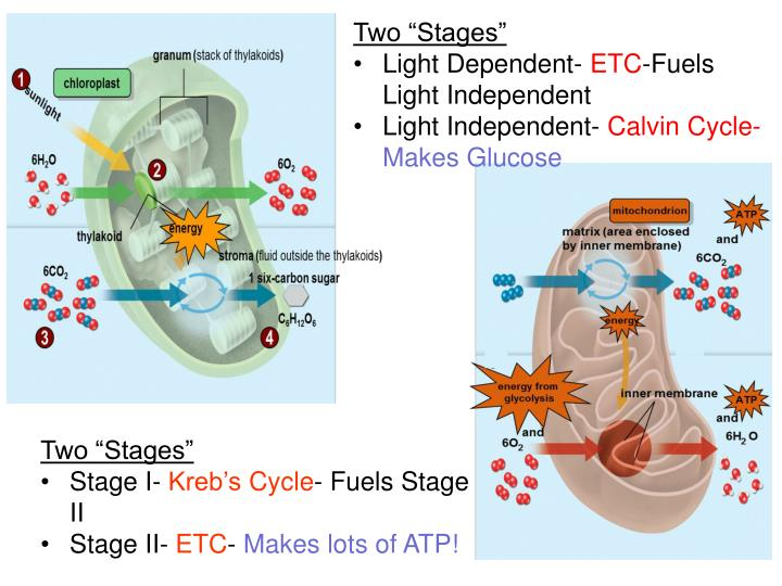"""Two """"Stages"""""""