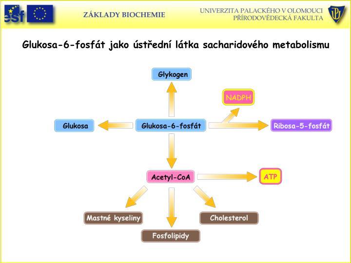 Glukosa-6-fosfát jako ústřední látka sacharidového metabolismu
