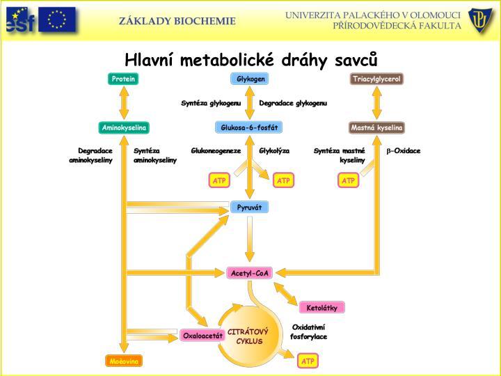 Hlavn metabolick drhy savc