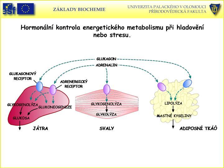 Hormonální kontrola energetického metabolismu při hladovění nebo stresu.