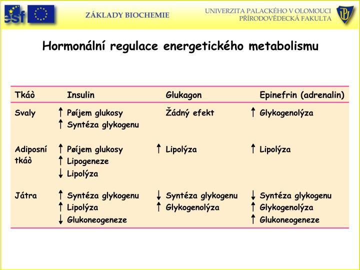 Hormonln regulace energetickho metabolismu