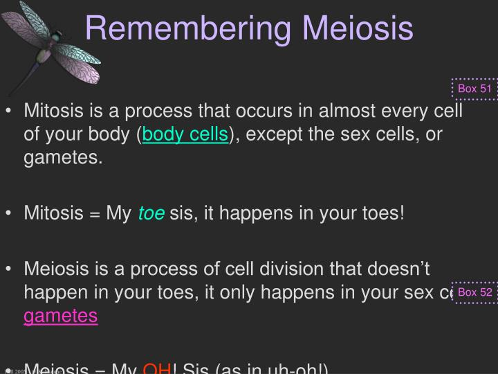 Remembering Meiosis