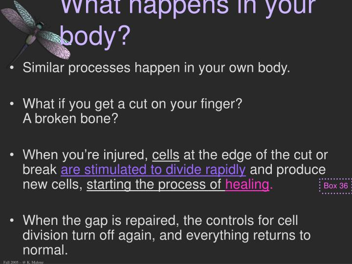 What happens in your body?