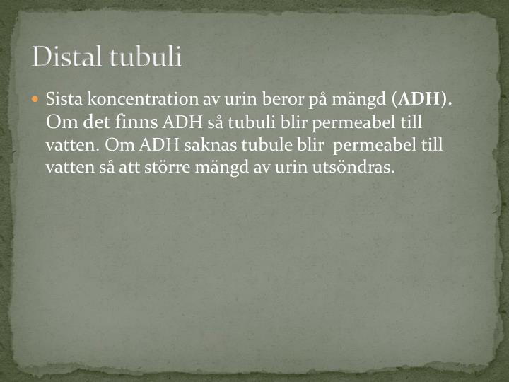 Distal tubuli