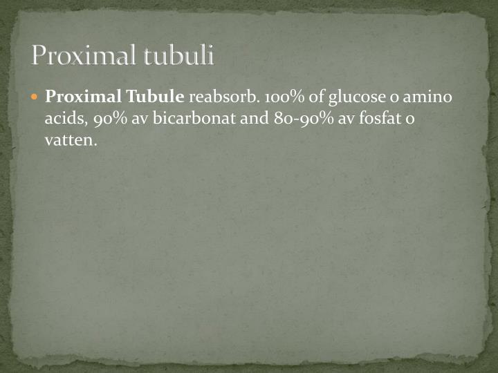 Proximal tubuli