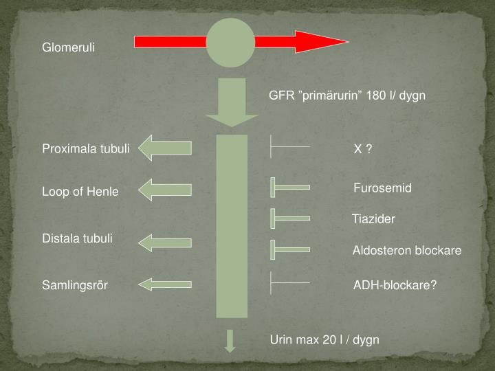 Glomeruli