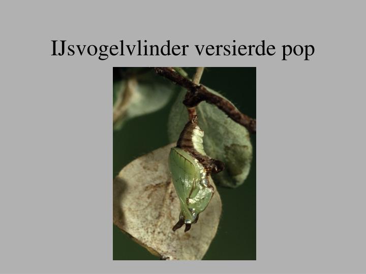 IJsvogelvlinder versierde pop