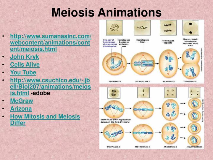 Meiosis Animations