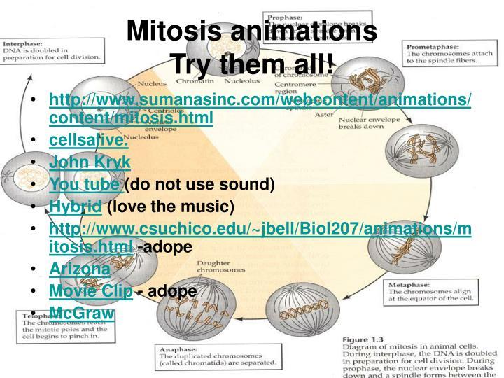 Mitosis animations