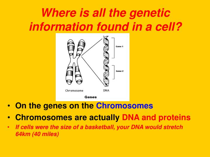 Where is all the genetic information found in a cell?