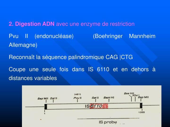 2. Digestion ADN