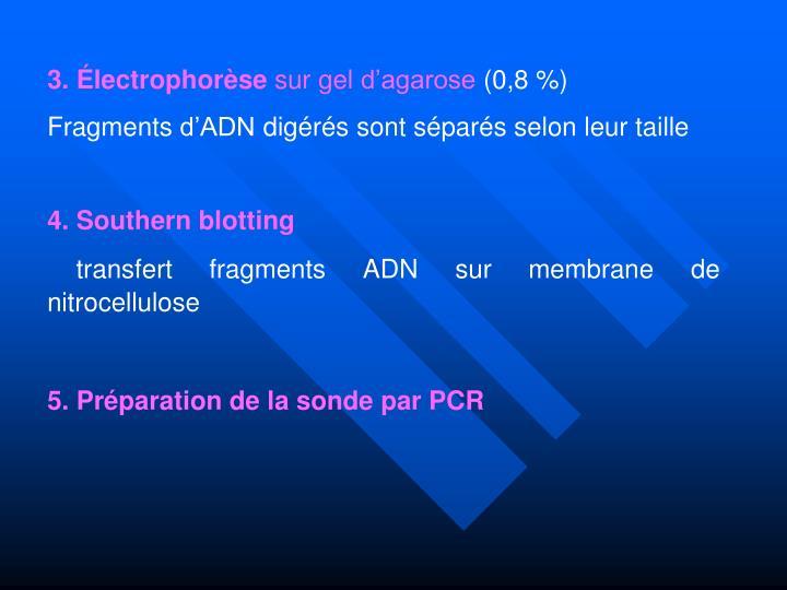 3. Électrophorèse