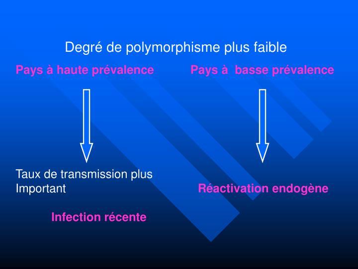 Degré de polymorphisme plus faible