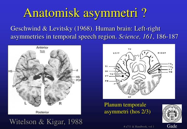 Anatomisk asymmetri ?