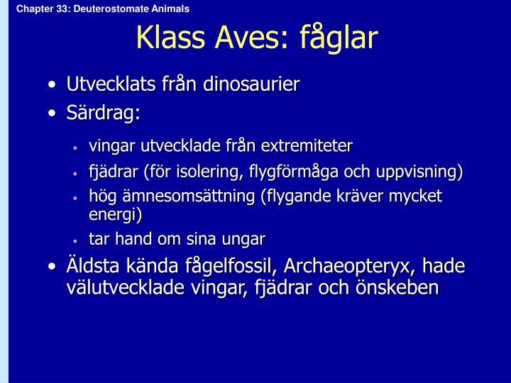 Klass Aves: fåglar