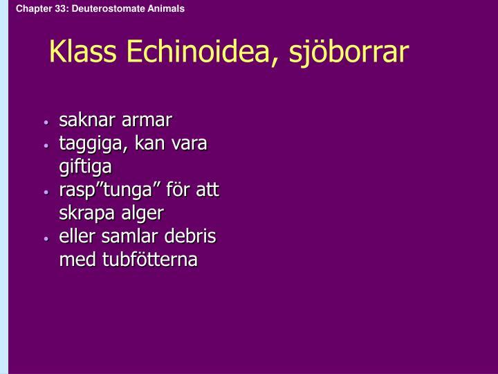 Klass Echinoidea, sjöborrar