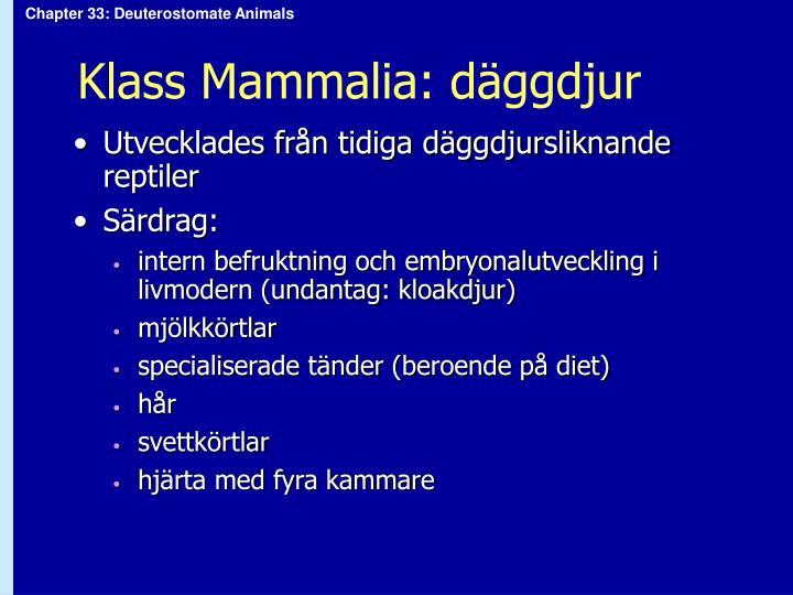 Klass Mammalia: däggdjur