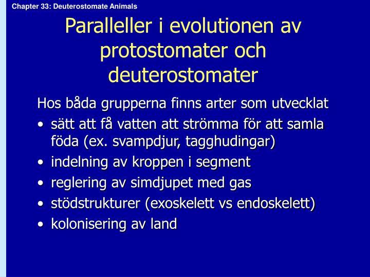 Paralleller i evolutionen av protostomater och deuterostomater