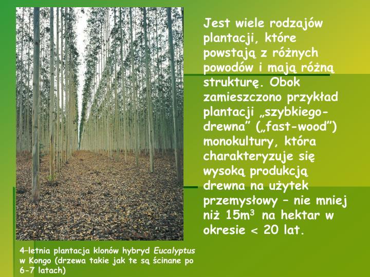 """Jest wiele rodzajów plantacji, które powstają z różnych powodów i mają różną strukturę. Obok zamieszczono przykład plantacji """"szybkiego-drewna"""" (""""fast-wood"""") monokultury, która charakteryzuje się wysoką produkcją drewna na użytek przemysłowy – nie mniej niż 15m"""